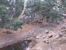 Fowlers Gap Creek at 09:00 on 9th January: almost dry.